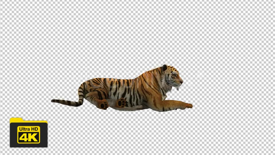 Tiger Sitting Videohive 19735680 Motion Graphics Image 3