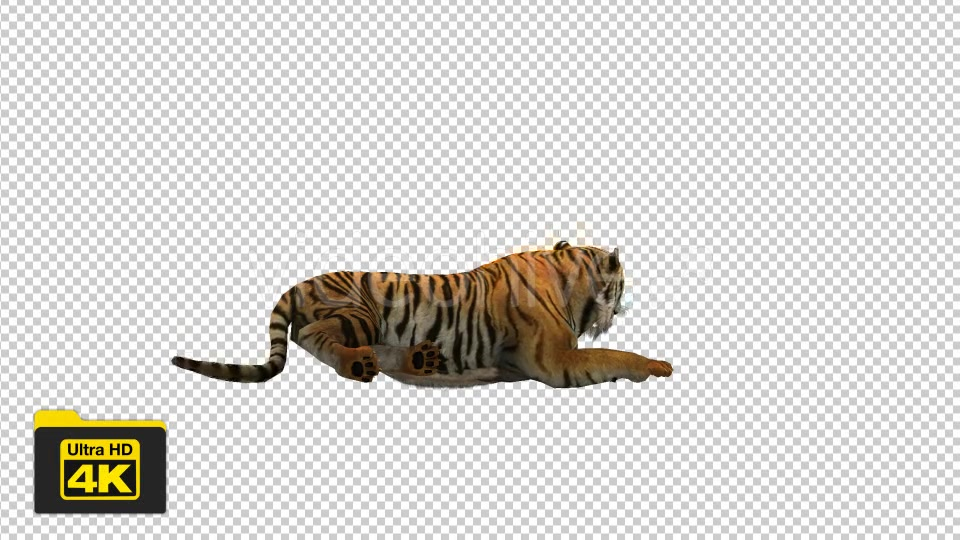 Tiger Sitting Videohive 19735680 Motion Graphics Image 4