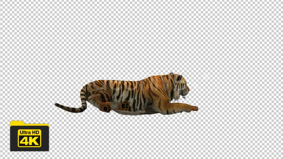 Tiger Sitting Videohive 19735680 Motion Graphics Image 5