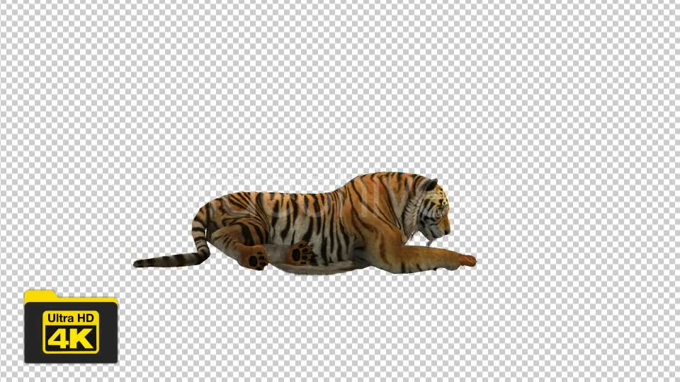 Tiger Sitting Videohive 19735680 Motion Graphics Image 6