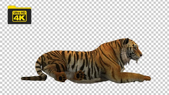 Tiger Sitting - Videohive 19735680 Download