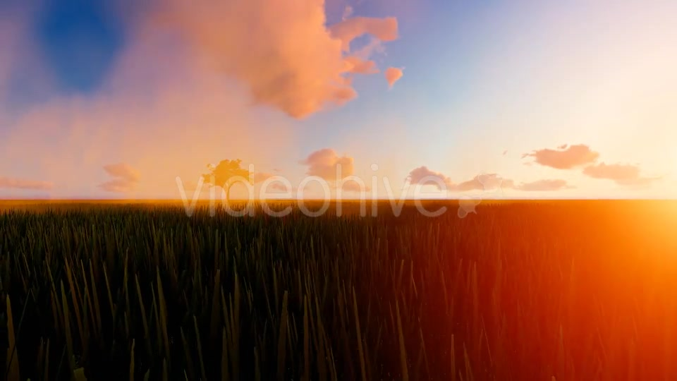 Tractor working in the field sunset Videohive 19761591 Motion Graphics Image 7