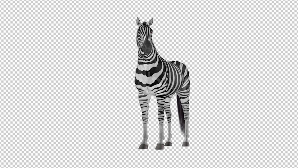 Zebra Pack of 2 Videohive 6494112 Motion Graphics Image 9